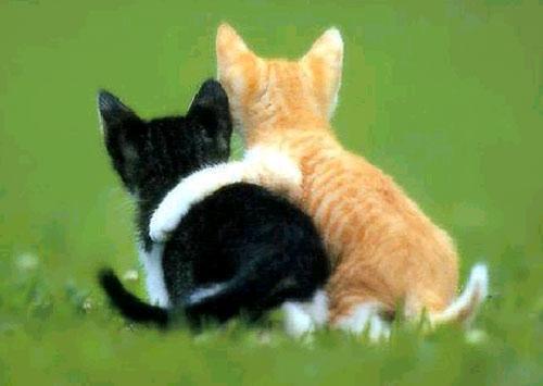 friends-cats